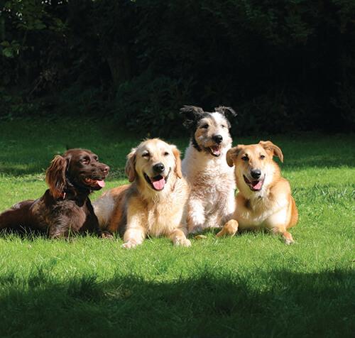 Benefits of Dog Daycare - Good Mojo Dog Manor