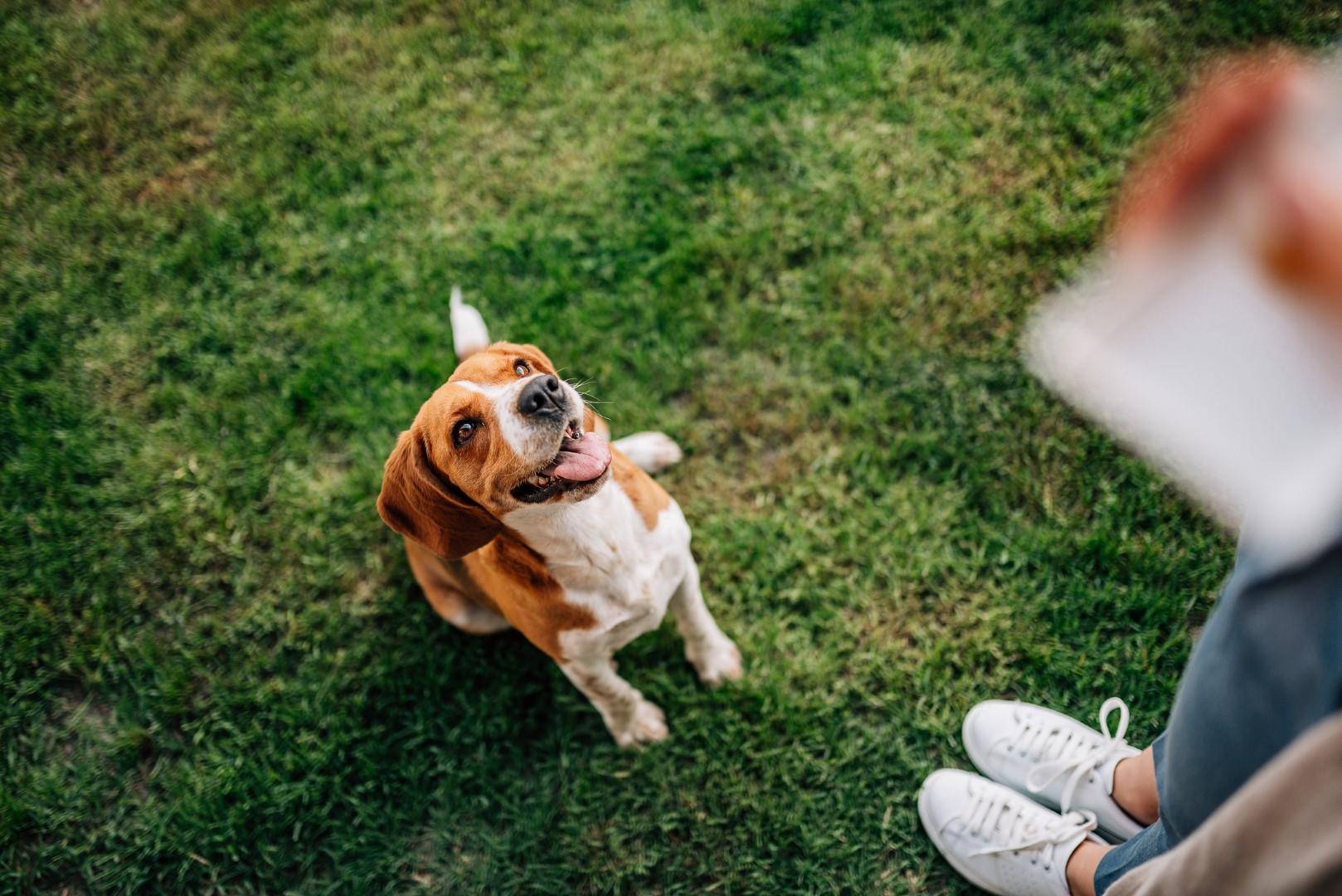 Dog sitting on command - Good Mojo Dog Manor