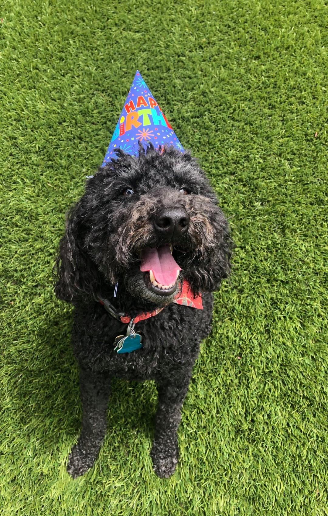 Dog with party hat at Good Mojo Dog Manor